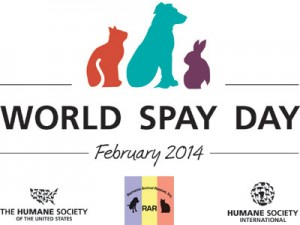 Operation Potcake is part of World Spay Day